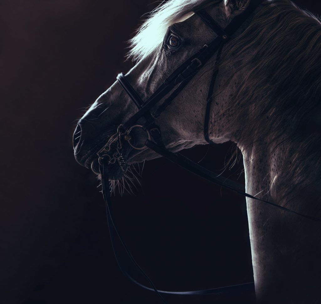 Digital print of a white horse against a black background
