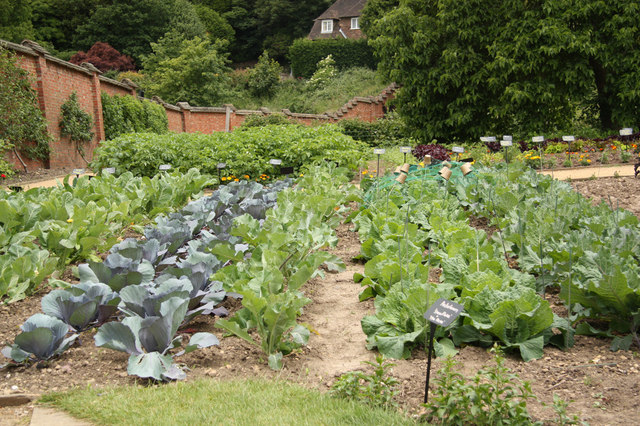 Vegetable Garden image