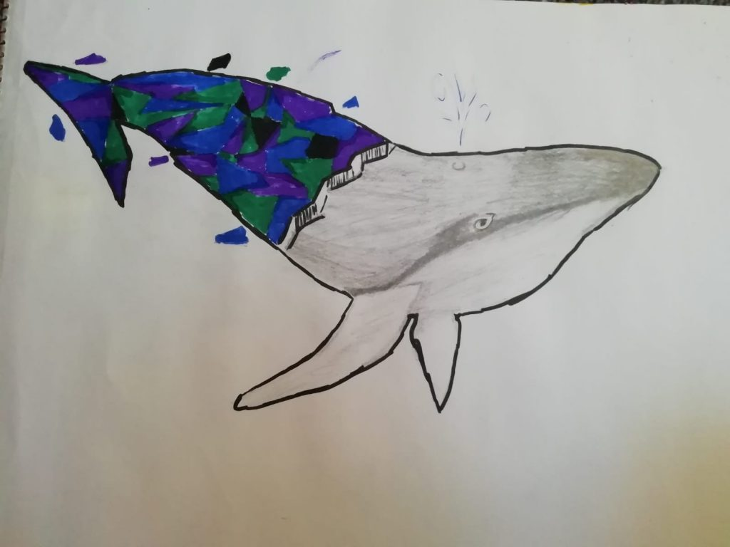 Drawing of a whale – half in colour, half in pencil.