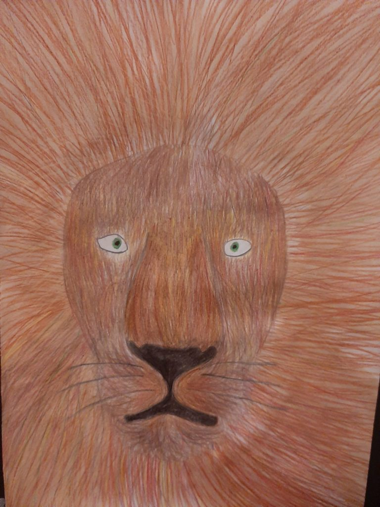 Coloured pencil drawing of a lion with a large mane.