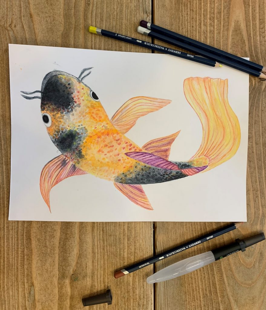 Colour drawing of koi crap.