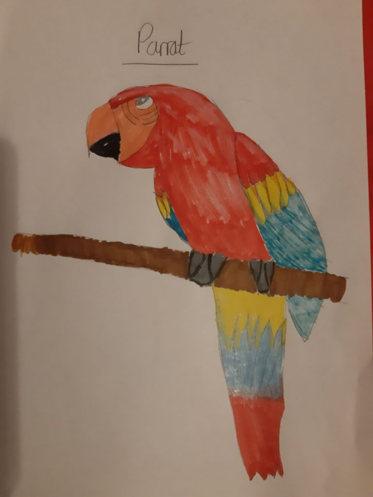 Colourful drawing of a parrot.