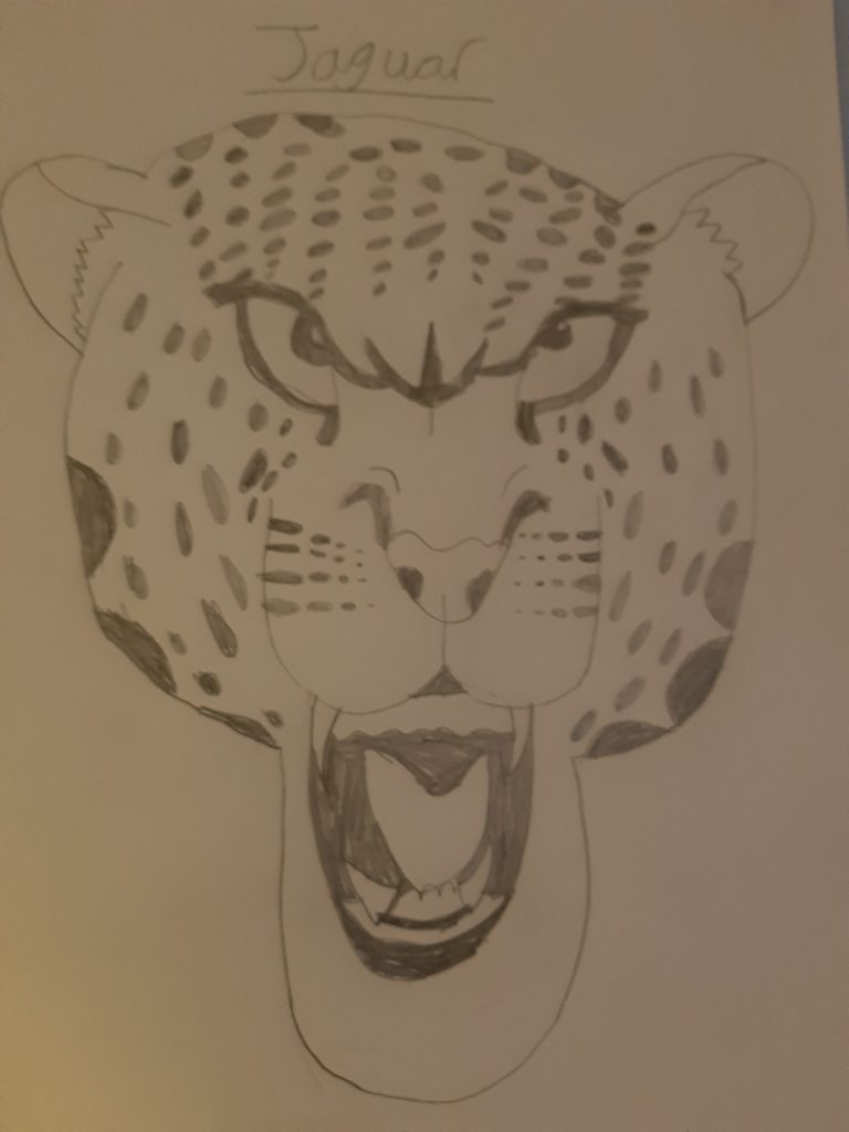 Pencil drawing of a spotty jaguar.