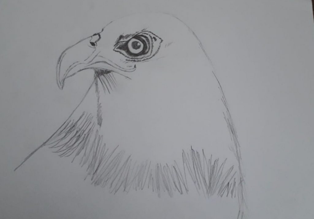 Line drawing of a golden eagle.