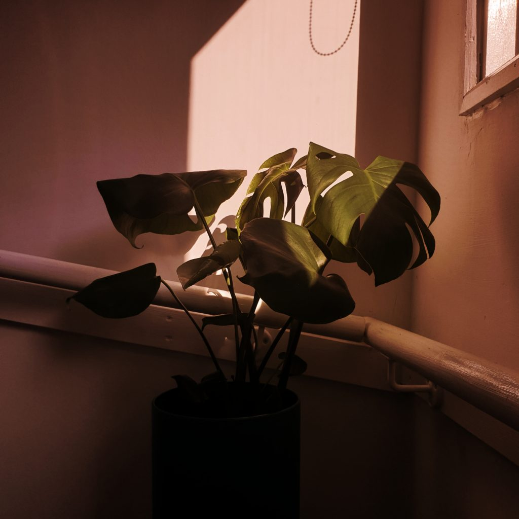 Photograph of a plant in the light of a window.