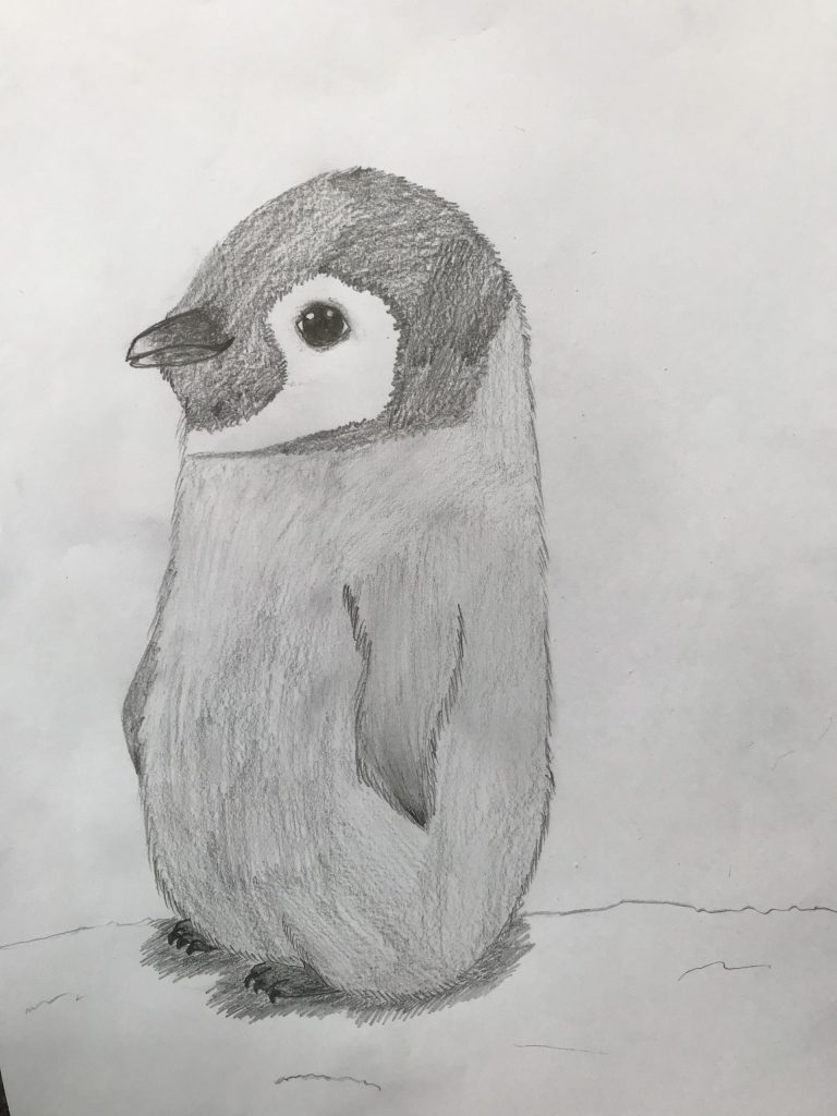 Shaded pencil drawing of a penguin chick.