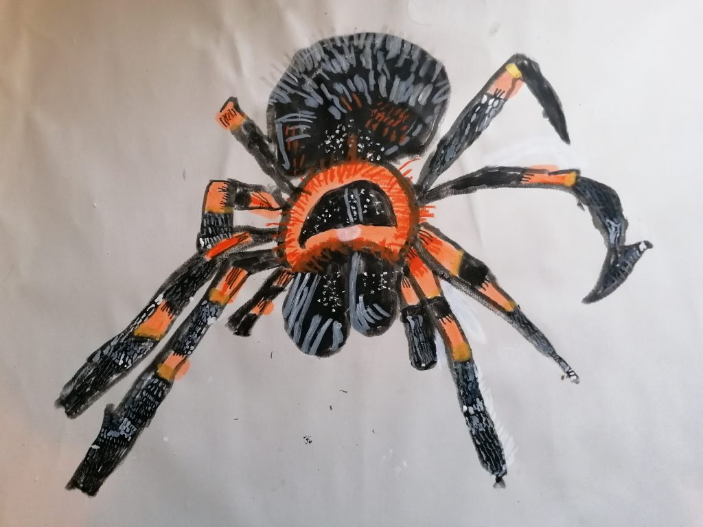 A detailed artwork of a tarantula in black and orange.