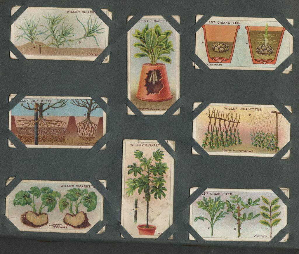 Eight cigarette cards of plants and gardening diagrams.