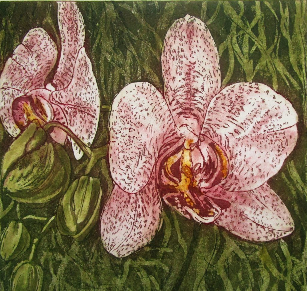 Etching of two pink orchids