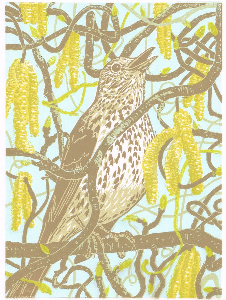 Lino print of a thrush in tree with catkins