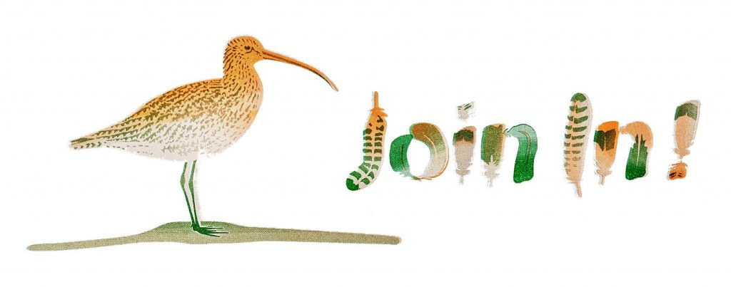 Humber Museums Partnership - Join in with the Birds