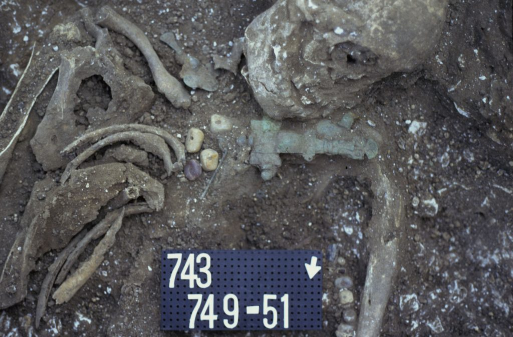 Humber Museums Partnership - Dead and Buried