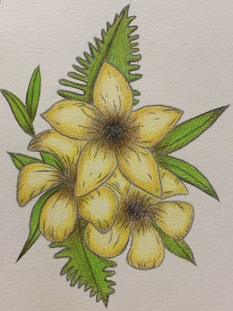 Coloured pencil drawing of yellow flowers.