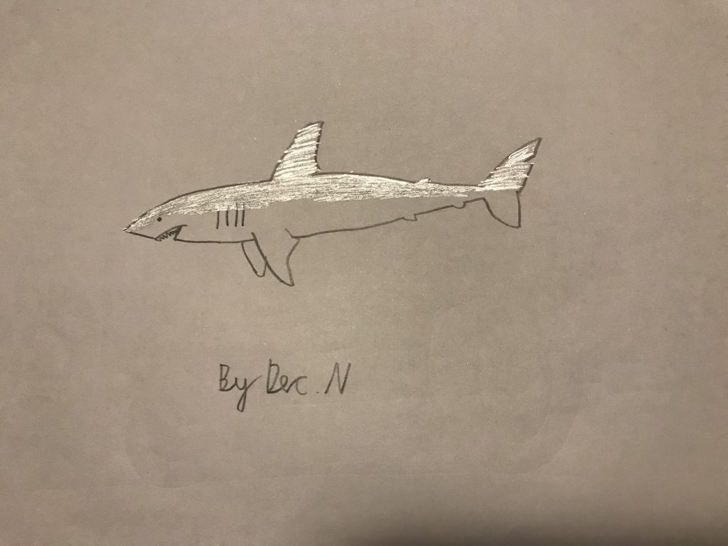 Drawing of a shark.