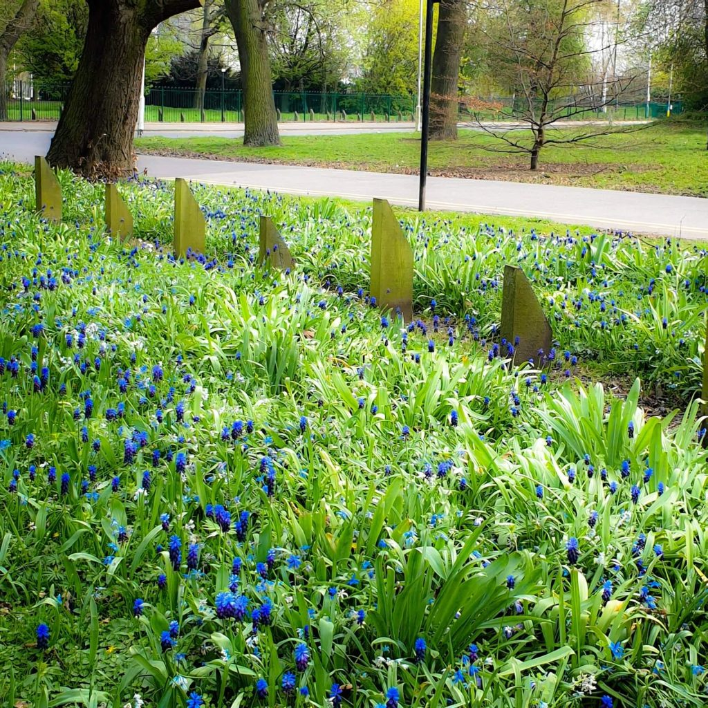 Photograph of flowers blooming in a park.