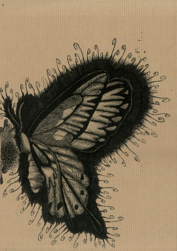 Black line drawing of a butterfly.