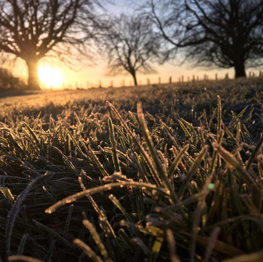 Photograph of frost on the grass, sun low in the background.